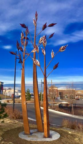 """Natives""Northglenn CO.4 groupings of 3 grasses each.16 - 30 feet tall"