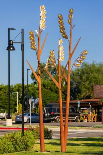 """""""Natives""""Northglenn CO.4 groupings of 3 grasses each.16 - 30 feet tall"""