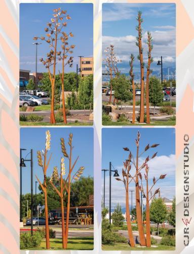 "Natives""Natives""Northglenn CO.4 groupings of 3 grasses each.16 - 30 feet tall"